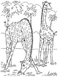 Small Picture Coloring Pages Cheetah Animal Coloring Pages Easy To Make Cheetah