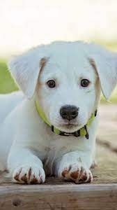 Cute Puppy Wallpaper - iPhone, Android ...