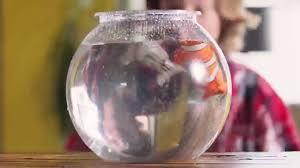 море чудес рыбка акробат бубба 12 см
