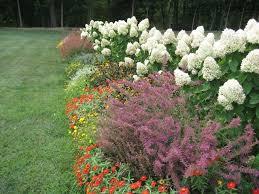 full size of garden perennial flowers garden design with emerald american arborvitae zone 5 full sun