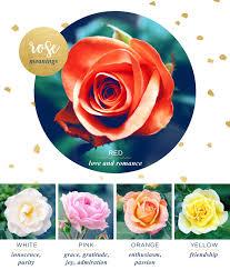 rose flower meaning and symbolism ftd com