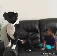 dog watching tv gif. funny dog, watching tv, video, gif dog tv