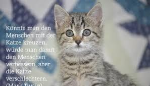 Schöne Katzensprüche Und Zitate Alles Catde
