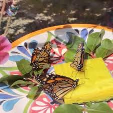 Small Picture Best 25 Hummingbird garden ideas on Pinterest Hummingbird