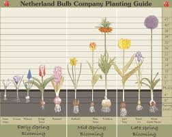Small Picture Ginger and Louise Pattern Co Bulb Planting Guide