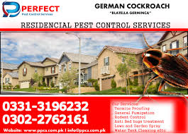 33+ Bedbugs Control Services  Images