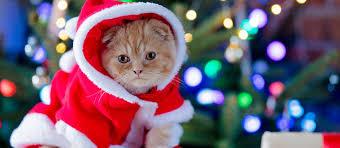 Best <b>Cat Christmas Costumes</b> this Holiday Season