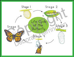 Life Cycle Of The Butterfly Nomenclature Cards Montessori Plus