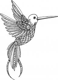 hummingbird animal coloring pages