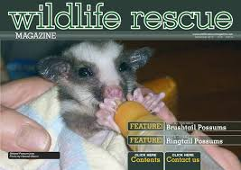 Issue 5a Wildlife Rescue Magazine By Wildlife Rescue