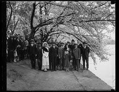 「1912,  cherry trees presented to america from japan」の画像検索結果