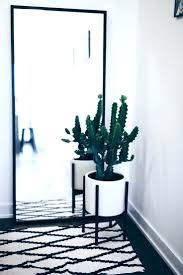 modern office plants. Mesmerizing Outstanding Modern Large Indoor Office Plants