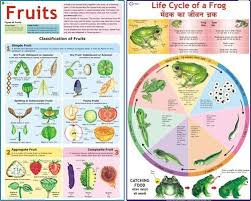 Biology Chart Biology Charts