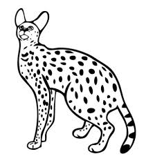 Small Picture Serval Wild Cat coloring page Free Printable Coloring Pages
