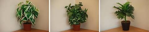 office plants for sale. Modren Plants I Made Cprints Of The  To Office Plants For Sale