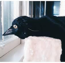 Resultado de imagen de crow window