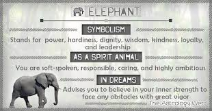 elephant meaning and symbolism the
