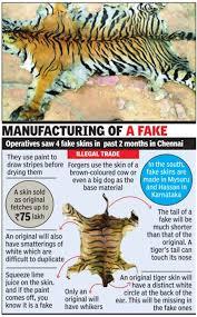 fake tiger skin agents go make a killing chennai news