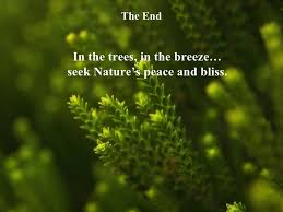 40 Great Quotes On Nature New Best Nature Quotes