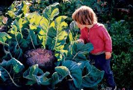 fall garden vegetables. cut and come again broccoli fall garden vegetables d