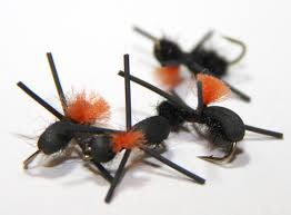 Ant Fly Patterns Fascinating Fly Tying Foam Ant YouTube
