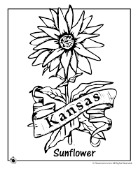 Small Picture State Flower Coloring Pages Kansas State Flower Coloring Page