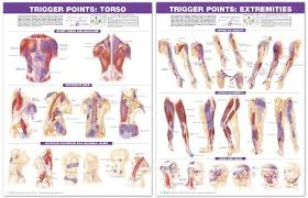 Free Trigger Point Chart Trigger Point Chart Set Torso Extremities 2nd Edition