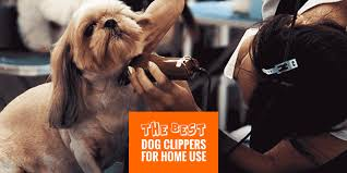 top 7 best dog clippers for home use
