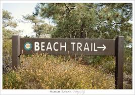 Image result for torrey pines beach