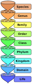 Sake Classification Chart File Biological Classification L Pengo Svg Wikipedia