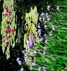 the gorgeous lily pond at heritage museum gardens in sandwich cape cod 2016