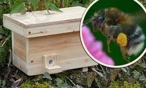 why trendy blebee nest boxes are really a waste of time daily mail