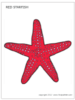 Small Picture Starfish Printable Templates Coloring Pages FirstPalettecom