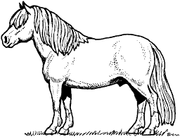 big horse coloring page horse coloring pages 17 pictures colorine 21451