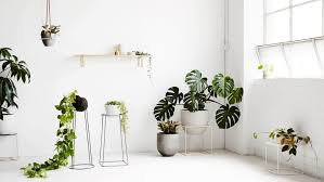 Interior Design Plants Inside House Indoor House Plants The Ultimate Guide Nonagon Style