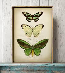 Butterfly Print Butterfly Poster Green Butterflies Wall