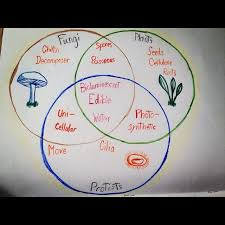 Venn Diagram Plants Venn Diagram Of The Kingdoms Of Fungi Protista Plants School