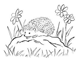 Small Picture Hedgehog Coloring Page Samantha Bell