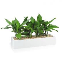office planter. image 1 office planter