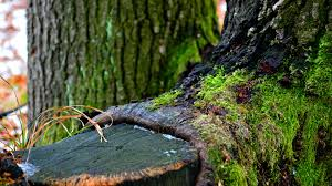 green, tree, winter 4k Winter, tree ...