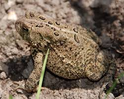 garden frogs. Contemporary Garden Invite Frogs And Toads Into The Garden With G
