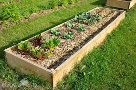 raised bed garden filled and growing
