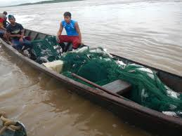 amazon river catfish. Brilliant Catfish This Is One Of The Many Fishermen Who Paddles Amazon River Each Morning  In Search To Catfish I