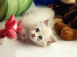 awesome cute pets hd wallpaper pack 69 free