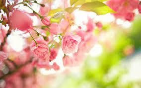 Spring Flowers Wallpapers Desktop ...