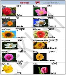 Flower Chart In English Hindi Charts For Kids Flowers Hindi Language Learning