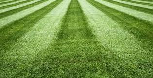 grass soccer field. Fresh Green Grass,football Field,soccer Field,field Background For Sports  Stock Photo Grass Soccer Field G
