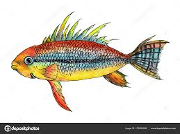 apistogramma cockatoo watercolor ilration dwarf cichlid freshwater aquarium fish exotic stock image