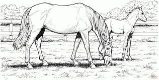 Gratis Kleurplaten Printen Paarden