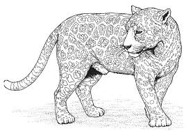 Small Picture Panther Animal Coloring Pages kids coloring pages 33 Free
